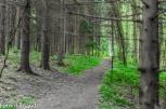 grossberg green