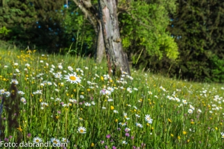Blumenwiese am Krenberg N71_8860.jpg