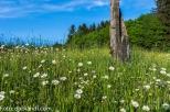 Blumenwiese am Krenberg N71_8866.jpg