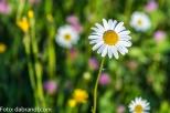 Blumenwiese am Krenberg N71_8856.jpg