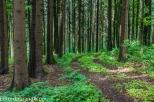 N71_8994.jpg Waldweg auf der Hochries